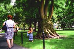 DSC01418 (Nigel Cooper*) Tags: people boston sony publicgarden publicpark 2013 sonyrx1