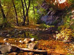 Autumn in Sedona 445 (JonM26) Tags: autumn arizona fall leaves sedona oakcreek
