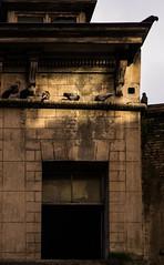 Their Porch (trm42) Tags: autumn brussels building home birds meetup belgium pigeons syksy belgia kyyhkyset lintukoti