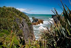 Looking Out over the Sea (Jocey K) Tags: sea newzealand sky plants water clouds rocks southisland westcoast punakaiki pancakerocks blowholes c418016711725165378 c418016711725165378a