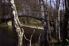 Dodder in full spate (Wendy:) Tags: bridge river 350d january kitlens treebark highwater weir dodder spate