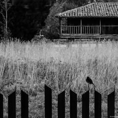 en el lmite (eMecHe) Tags: espaa blancoynegro lumix asturias bn panasonic contraste soledad silueta pajaro obra siluetas luarca silencio panera horreo rodri blanconegro hierba 2014 verja hierros fragmentos fronteras lx5 almua emeche vision:text=0669 vision:sky=0706 vision:outdoor=0892