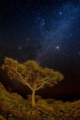 Light Painting from Ndutu, Tanzania (MyKeyC) Tags: africa landscape tanzania scenic todd roadside drivingshot