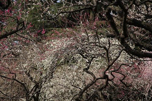 京都府立植物園