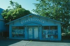 Blackberries_0147 (Mike: Time Off, Back Aug.) Tags: blue usa america us artist blackberry unitedstatesofamerica business storefront wa washingtonstate quaint ptroberts