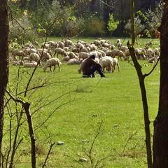 silencioso (archifra -francesco de vincenzi-) Tags: italy square sheep shepherd pastor herd moutons herds carr berger pecore pastore molise isernia ovejas gregge ovini troupeau rebaos armenti archifraisernia francescodevincenzi