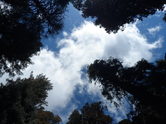Look up, look way up! (Valley Dweller 68) Tags: california trees vacation sky usa tree nature clouds forest sequoia earthday