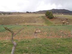P4290077