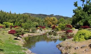 Bambouseraie. Le jardin du dragon3