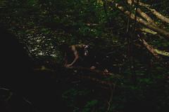 #101 Creeping (photoshepherd) Tags: mystery forest canon wonder explore jungle 5d crawl curiosity f4 angst creep creeping 24105 markiii