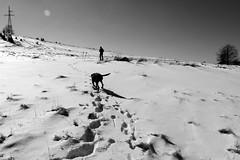 végtelen hómező / endless snow field (debreczeniemoke) Tags: winter blackandwhite white snow black snowfield gutin fekete hó fehér tél feketefehér hómező canonpowershotsx20is gutinhegység munţiigutâi munţiigutin gutinmountains