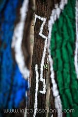 Blog: Turismo por Euskadi / Pais Vasco, Bizkaia / Vizcaya: El Bosque pintado de Oma de Ibarrola en Kortezubi (Iigo Escalante) Tags: trees espaa color art nature colors forest spain europe colours arboles colores bosque land oma turismo bizkaia euskadi vizcaya paisvasco ibarrola pintado animado bosquepintado kortezubi