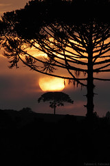 Sol (fabsciack) Tags: morning sunset pordosol brazil sun tree sol brasil sunrise santacatarina árvore sul manhã nascerdosol araucária pinheiro fraiburgo