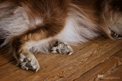resting paws (sure2talk) Tags: lensbaby flash paws speedlight softbox diffused offcamera sb900 nikond7000 lensbabycomposerpro sweet50optic restingpaws