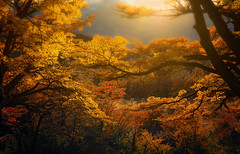 Season's symphony  (Explored) (Sapna Reddy Photography) Tags: autumn light patagonia color fall argentina colors leaves golden seasonal foliage
