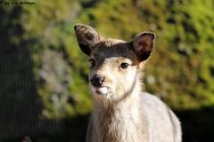 IMG_9209 (u.wittwer) Tags: park zoo schweiz switzerland tiere suisse tierpark heimat arth naturpark goldau widi