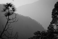 La Palma (eatmymoto) Tags: trees bw mountain tree nature rock pine island volcano blackwhite spain air kanaren natur insel caldera lapalma kiefer canaries bume canaryislands baum spanien espagna vulkan nadelbaum schwarzweis islabonita