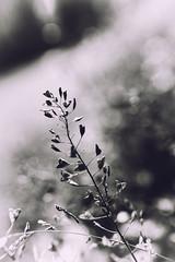 (NINA KOB) Tags: light plant love nature mono spring heart neighbor