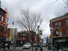 Tree in Jersey City (c_nilsen) Tags: tree digital newjersey jerseycity digitalphoto