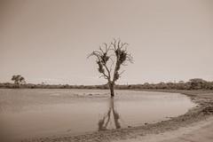 Suedafrika-34 (Lukas P Schmidt) Tags: nationalpark hippo krugerpark