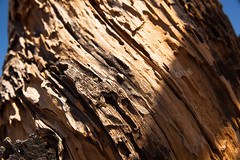IMG_5164 (Lastexit) Tags: california desert joshuatree yuccavalley
