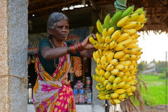 LIFE GOES BANANAS (GOPAN G. NAIR [ GOPS Photography ]) Tags: gopsorg gops gopsphotography gopangnair gopan photography sugandhi banana plantain anegundi httpwwwgopsorgp1616 village hampi karnataka tour india peaceful peace