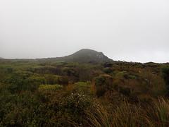 Low upland vegetation on Loop Track (dracophylla) Tags: newzealand codfishisland whenauhoa