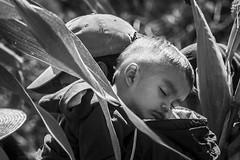 (Ivn Rubn) Tags: light shadow bw detalle detail luz monochrome rural countryside kid time sleep father dream son sombra bn nostalgia campo instant dormir contemplative padre nio longing hijo sueo contemplation tiempo instante monocromtico ntimo contemplacin contemplativo intimat