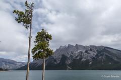 IMG_9228 (Scott Martin Calgary) Tags: ca trees canada mountains alberta lakeminnewanka improvementdistrictno9