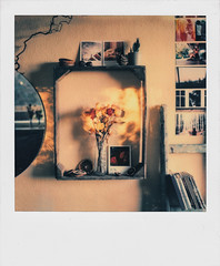 10/06/2016 (the girl who made it on her own) Tags: film sunrise polaroid sx70 morninglight stuttgart decoration myhome homedecor impossible mywall earlymorninglight orangewalls 6inthemorning impossibleproject impossiblefilm ronakeller filmmemories driedrosesinthemorninglight