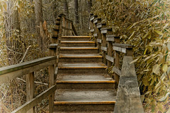 Stairs turning (atitsince82) Tags: california wood bridge red tree philadelphia up leaves yellow fog stairs turn forest landscape hotel wooden stair walk foggy rail down hike grill lobby made trail staircase jungle twig marsh railing turning manufactured