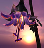 Floating Tuberplant Flower Detail (Elicio Ember) Tags: flower cg secondlife fantasyflower cerridwenscauldron elicioember
