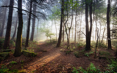 Pinewoods morning (J C Mills Photography) Tags: uk morning trees light england mist woodland landscape spring derbyshire matlock conifer pinewoods lumsdale canon5dsr