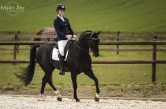 Nr. 41 (malinahr) Tags: horse color nature animal sport skne outdoor natur sterlen djur hst tvling skillinge
