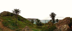 Palms of the lake (mahyarkahkesh) Tags: palm palms lake green vegetation spring cosy refreshing cool camp camping trip wild montain