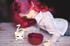 IMG_0950 (Alighieri_Floren) Tags: doll bjd wish abjd dollleaves