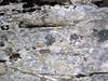 Black chert nodules in limestone (Chepultepec Formation, Lower Ordovician; Natural Bridge State Park, Virginia, USA) 5 (James St. John) Tags: chepultepec formation limestone limestones marine natural bridge state park virginia ordovician calcite calcium carbonate rock rocks sedimentary chert nodule nodules flint quartz