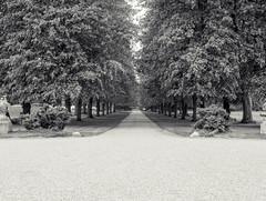 Week 19 (Jamie Goldsworthy) Tags: nottingham trees summer blackandwhite project path horizon sunny olympus nottinghamshire 52 dayout oly 25mm ruffordabbey 52weeks project52 em5mk2