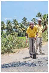 Road making (Ramalakshmi Rajan) Tags: people india nikon streetphotography indians mayday atwork tamilnadu lifeinindia nikond5000 nikkor18140mm