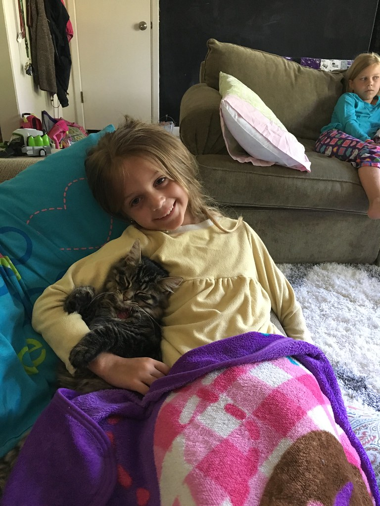 Berkley and her kitties