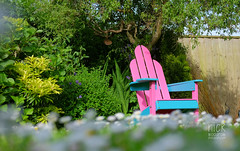 adirondack Chair (Nick Woodrow: Thanks for all of your comments) Tags: adirondack adirondackchair diy woodwork garden pink blue nickwoodrow fujifilmxt1 fujinon35mm