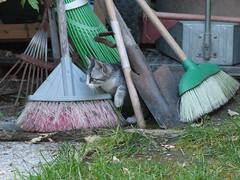 04062016N3 (starezubre) Tags: gatti giardino 2016 gattini mamme giocchi