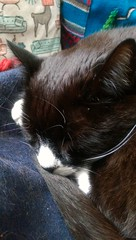 Caturday morning snooze  (KT-wu) Tags: cat caturday blackandwhitecat tuxedocat kitty sleep snooze relaxing