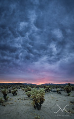 Dark Sunset at Cholla Cactus Garden (Mike Ver Sprill - Milky Way Mike) Tags: thedarksunset chollacactusgarden clouds cloudy storm stormsabrewin landscape panorma pano panormaic california joshuatreenationalpark cali travel 29springs nikond800 1424 hdr highdynamicrange stack michaelversprill mikeversprill peterlik best greatest photography fineart amazing camping roadtrip explore gloomy gloom dramatic drama