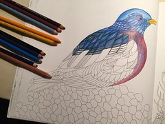 My bird coloring that I am doing, using Prismacolor pencils. (f l a m i n g o) Tags: bird coloring 19863