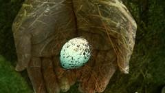 the safe nest (Mel's Looking Glass) Tags: hands child nest egg mmm challenge mockingbird 82nd