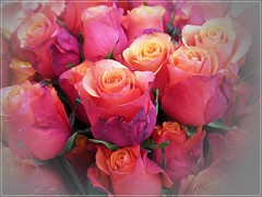 roses for you (Steffi-Helene) Tags: flowers roses gardens fleurs blumen bouquets