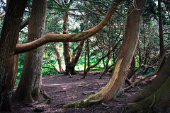 Fantasy Forest (Edd144) Tags: trees plants tree forest woods nikon cornwall sigma fantasy jungle 1835 d7100