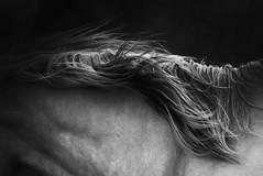 tonyworkshop332 (Muddy Love Photography) Tags: horses horse winner wyoming herd