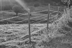 geada (Miriam Cardoso de Souza) Tags: frio geada cerca rvore inverno nature natureza photo